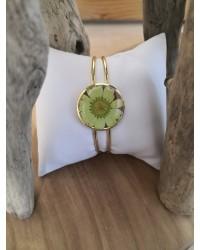 Jonc Marguerite Soleil vert amande